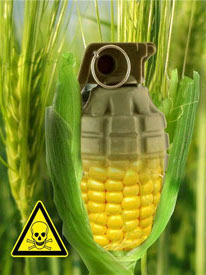 why should we ban gmos Why we will need genetically most important food crops could help fulfill initial hopes for genetically modified organisms of mit technology review.