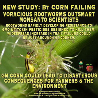 Detox from Dangerous Bt-toxin Found in GMO Food ...