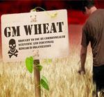 Class-action-lawsuit-against-Monsanto-zombie-GMO-wheat