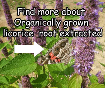 Licorice_Root