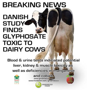 chemicals-in-milk-glyphosate-toxic-to-dairy-cows
