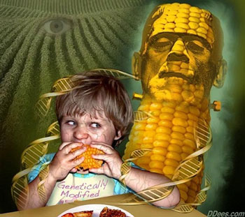 The gene of genetically modified foods can be transferred into human blood/DNA researchers say