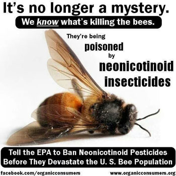 bees die because of Neonicotinoid pesticides manufactured by Bayer and Syngenta