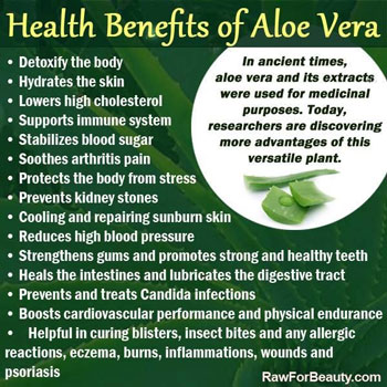 Image result for aloe vera medicinal benefits pic
