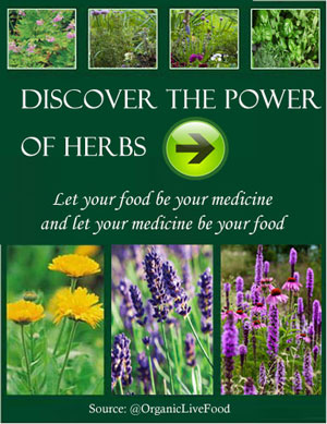 herbal-extracts-traveler-herbals-first-aid-kit