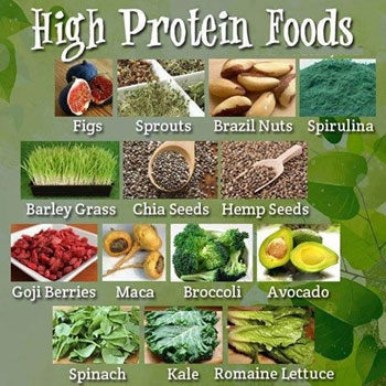 Meat Free Protein Source Plant Based Foods High