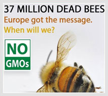 starving-hives-bees-exposed-to-systemic-pesticides-are-unable-to-gather-enough-pollen-neonicotinoid-kill-bees