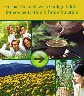 Ginkgo-biloba-concentration-and-brain-function