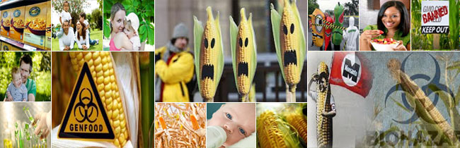 Monsanto Addresses EPA Memorandum on Corn Rootworm Protein ...