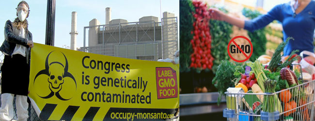 gmo-FDA-congress