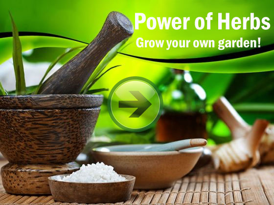 Benefits of herbal supplements
